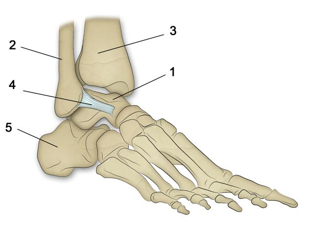 ligament distendu cheville que faire
